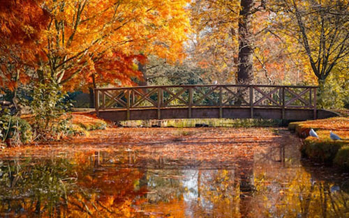 Romance in the movies have the edge when the scenes are set in an autumnal setting ablaze in red, yellow and orange.
